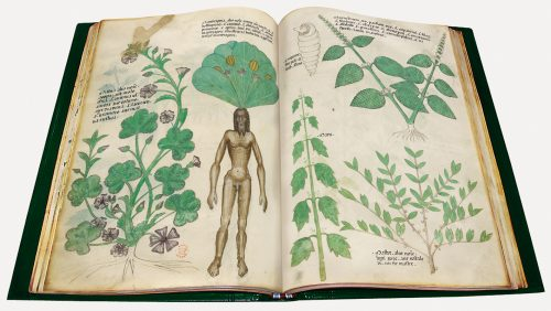 Tractatus de herbis - exposición Tesoros bibliográficos (s. X – XVI): El arte y el genio al servicio del poder