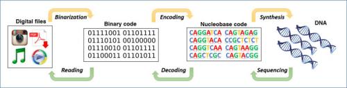 almacenar datos en ADN